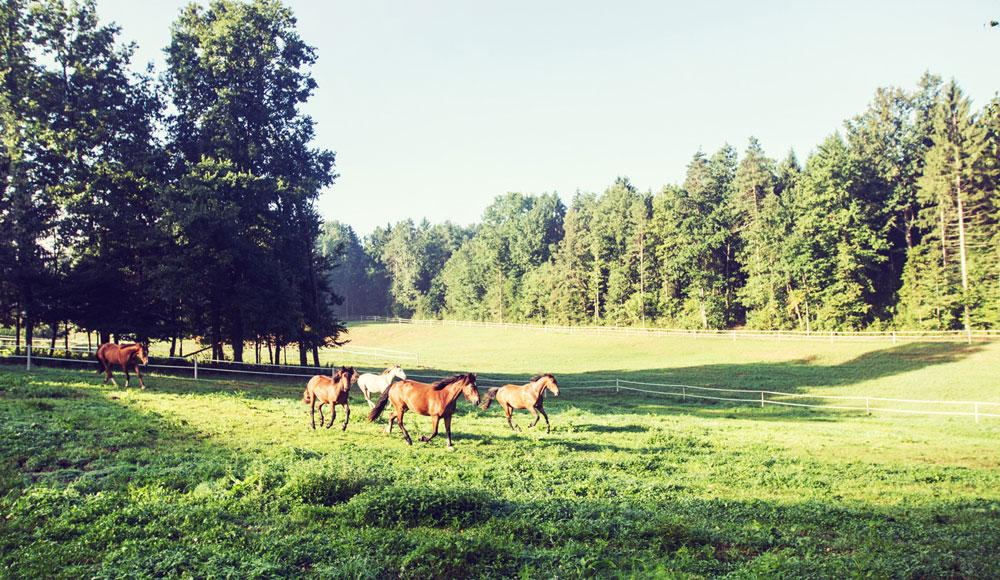Stațiunea de cai Stariha