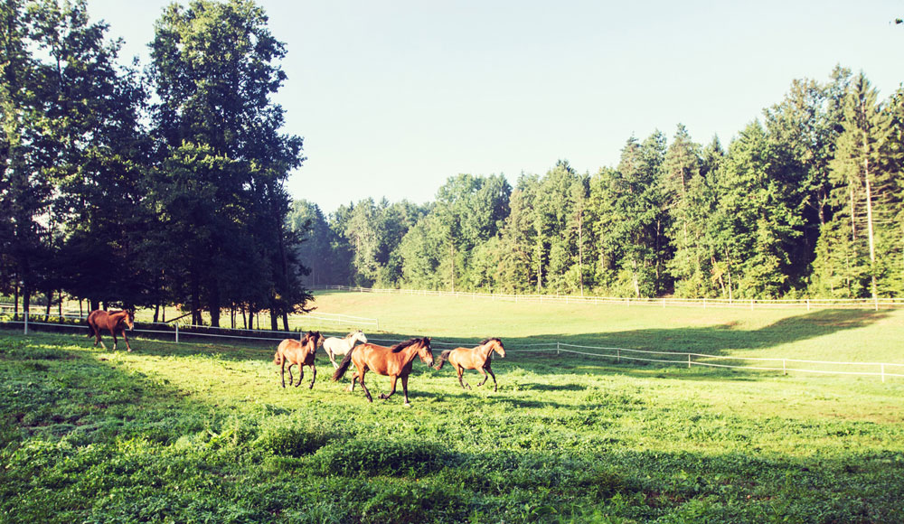 Horse Resort Stariha