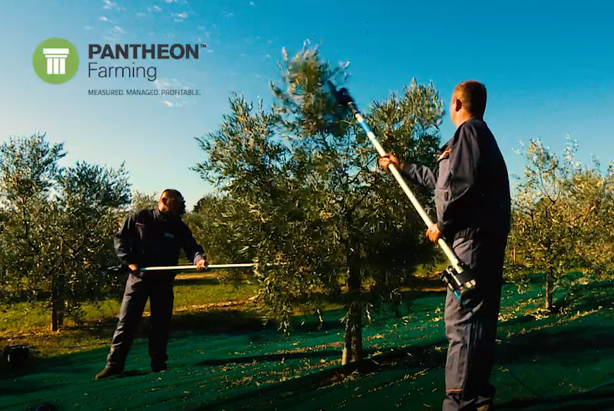 PANTHEON Farming Novelties – Welcome to the Virtual Olive Oil Cellar